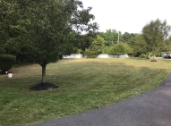 Lawn before aeration