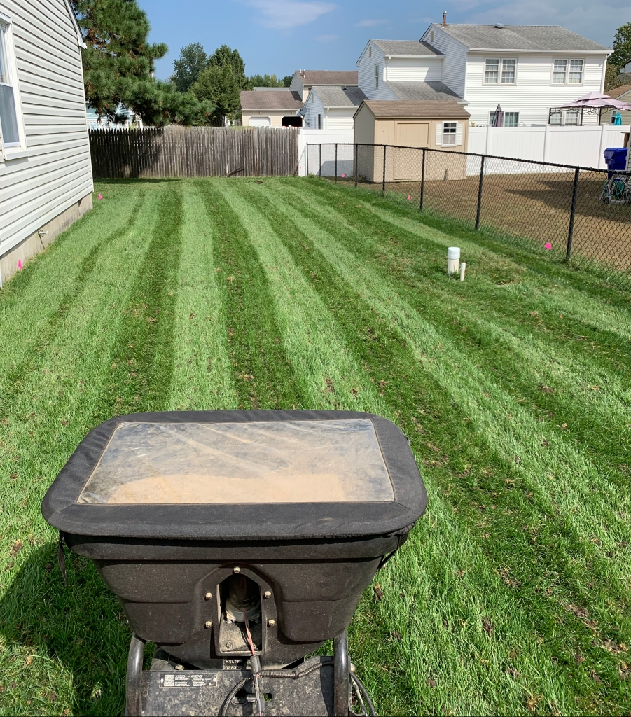 Lawn Aeration and Reseeding